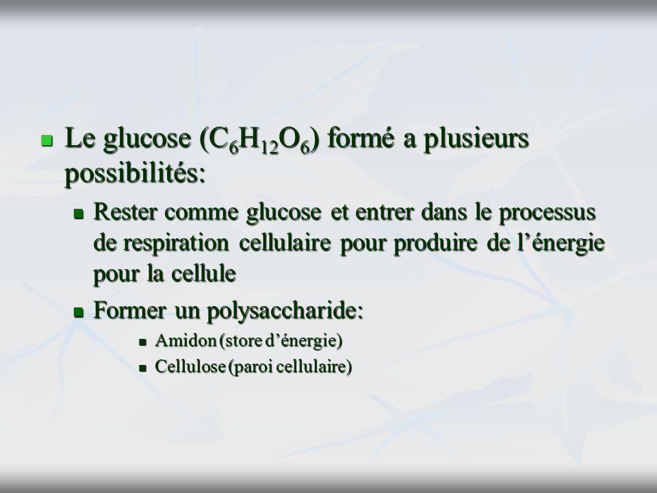 Le glucose (C6H12O6) formé a plusieurs possibilités: