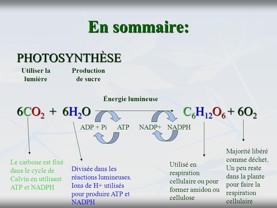 En sommaire: PHOTOSYNTHÈSE 6CO2 + 6H2O C6H12O6 + 6O2