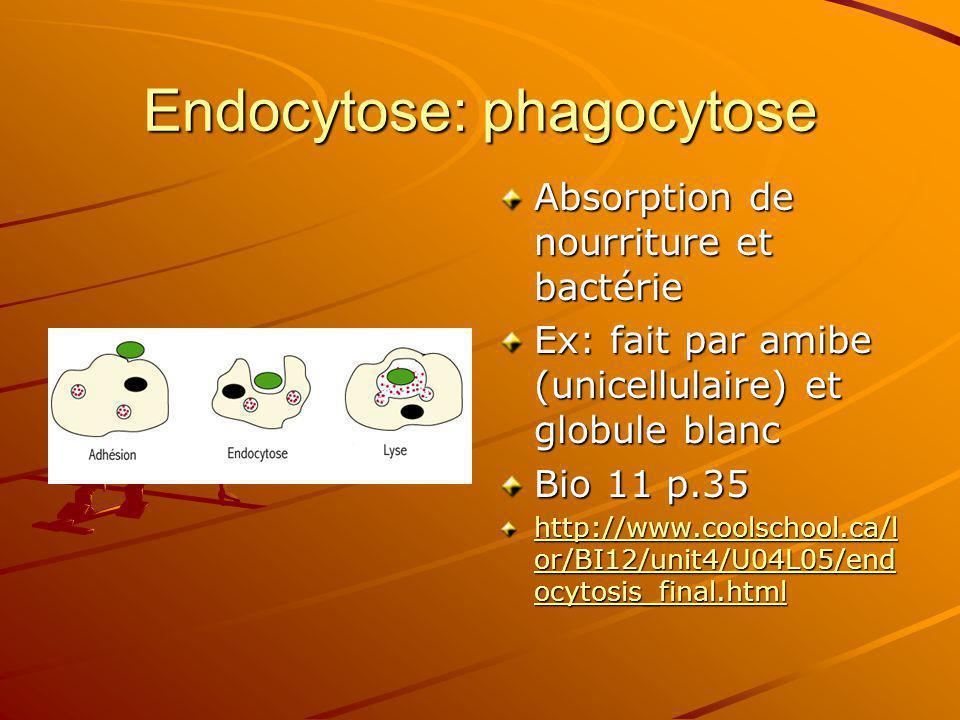 Endocytose: phagocytose