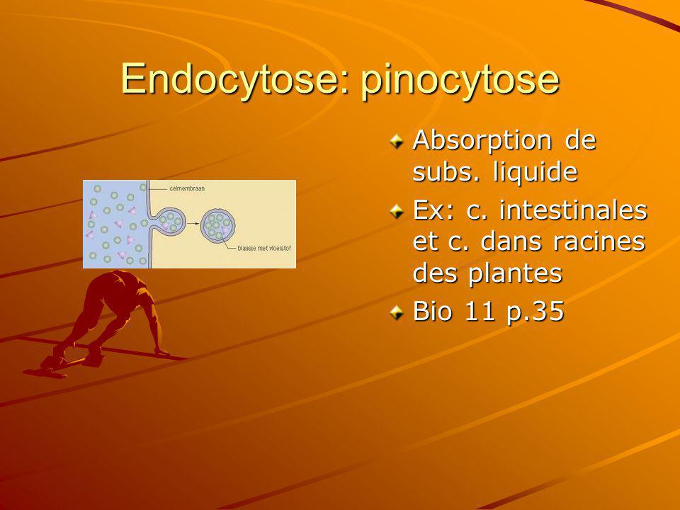 Endocytose: pinocytose