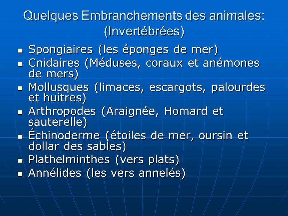 Quelques Embranchements des animales: (Invertébrées)