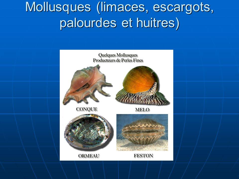 Mollusques (limaces, escargots, palourdes et huitres)