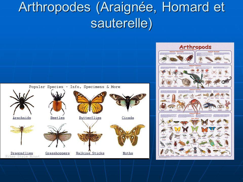 Arthropodes (Araignée, Homard et sauterelle)