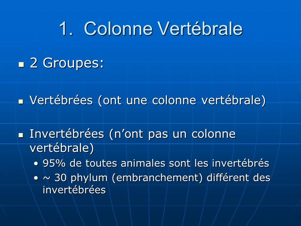 1. Colonne Vertébrale 2 Groupes:
