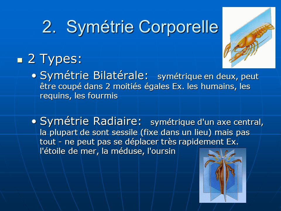 2. Symétrie Corporelle 2 Types: