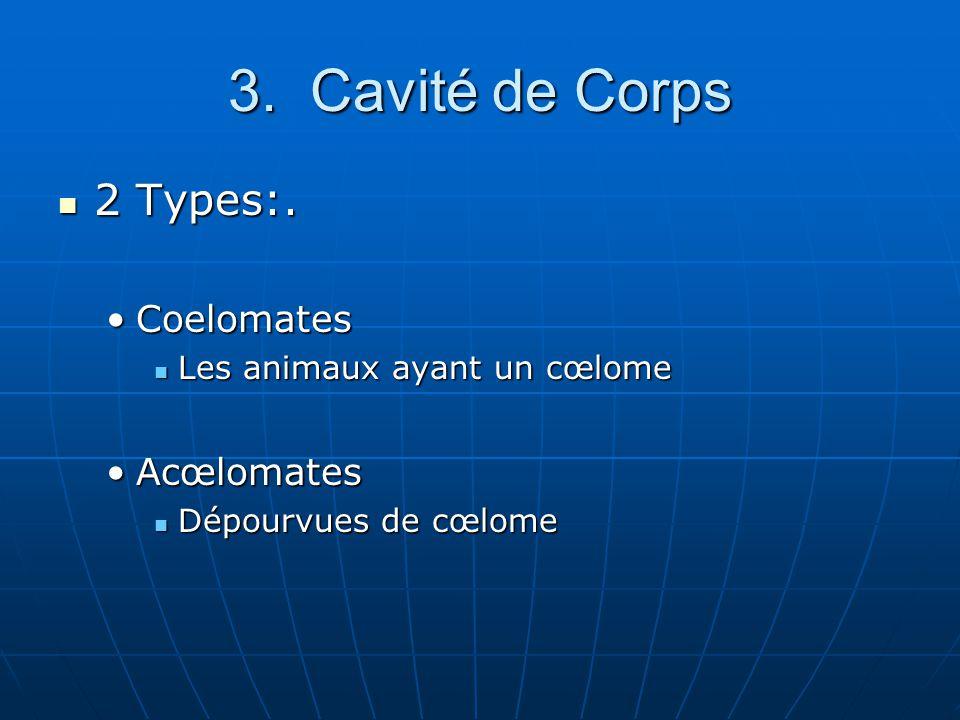 3. Cavité de Corps 2 Types:. Coelomates Acœlomates