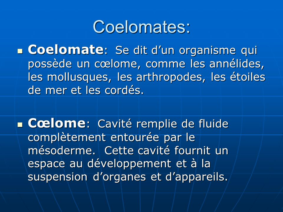 Coelomates: