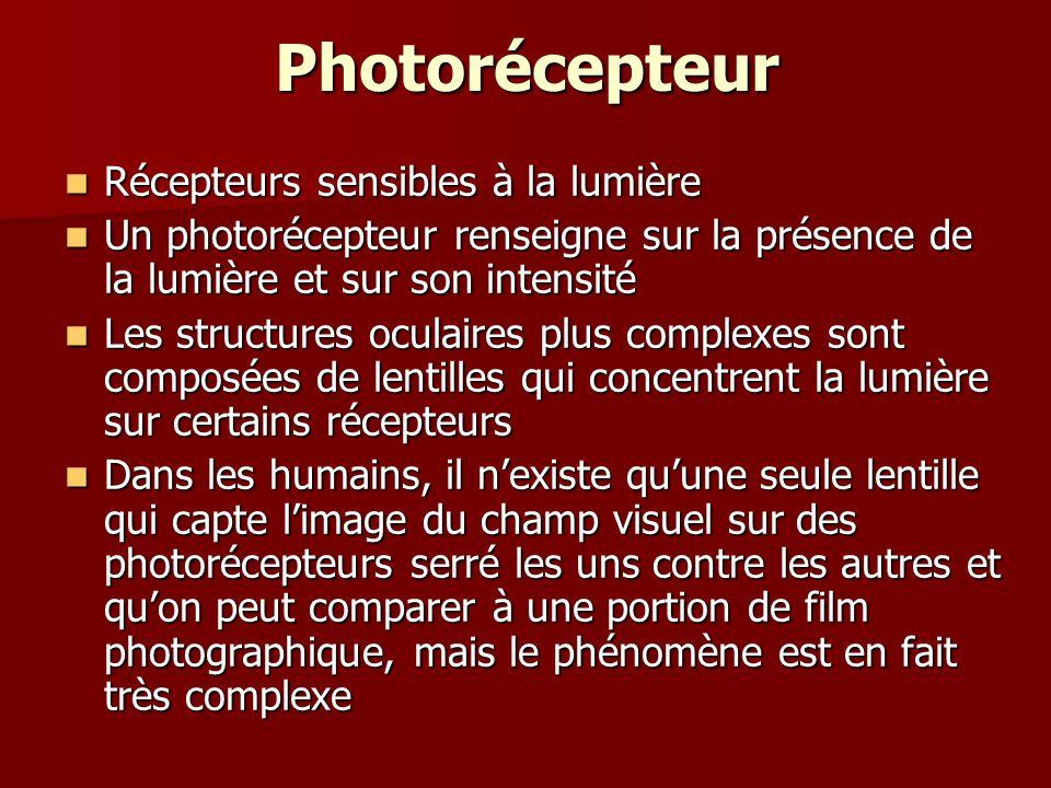 Photorécepteur Récepteurs sensibles à la lumière