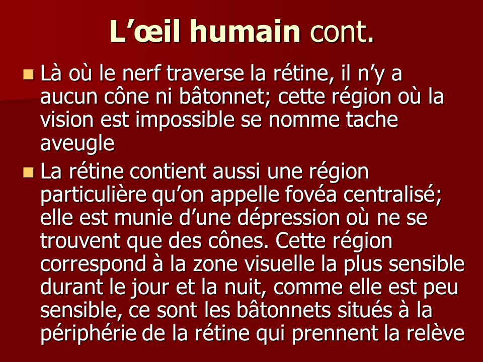 L'œil humain cont. Là où le nerf traverse la rétine, il n'y a aucun cône ni bâtonnet; cette région où la vision est impossible se nomme tache aveugle.