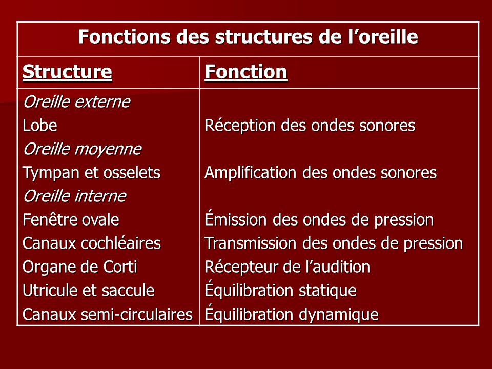 Fonctions des structures de l'oreille