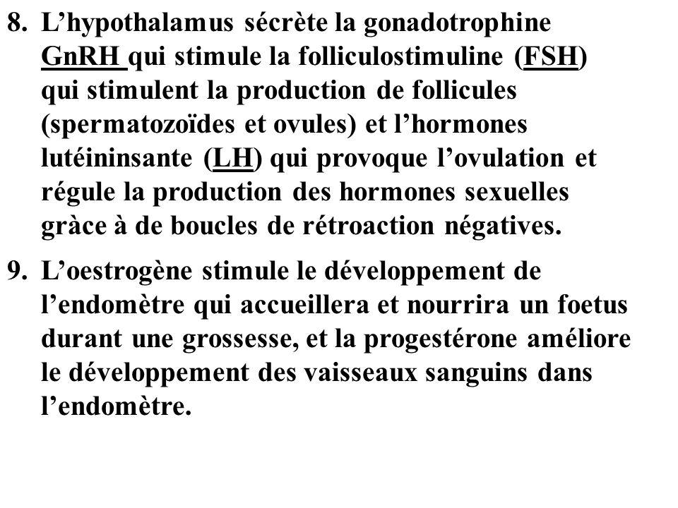 L'hypothalamus sécrète la gonadotrophine GnRH qui stimule la folliculostimuline (FSH) qui stimulent la production de follicules (spermatozoïdes et ovules) et l'hormones lutéininsante (LH) qui provoque l'ovulation et régule la production des hormones sexuelles gràce à de boucles de rétroaction négatives.