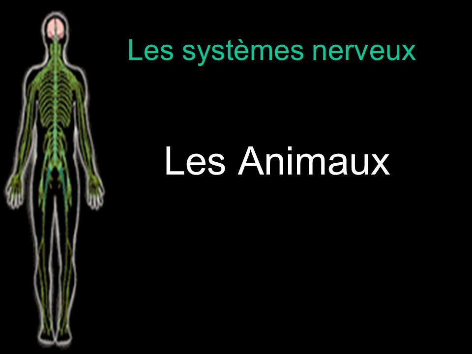 Les systèmes nerveux Les Animaux