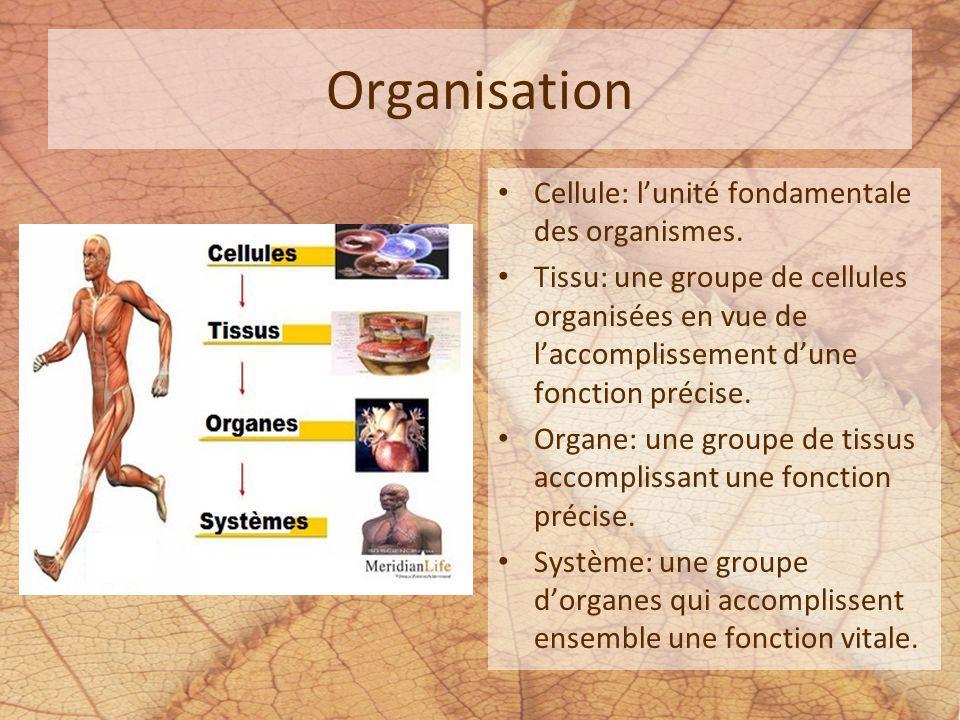 Organisation Cellule: l'unité fondamentale des organismes.