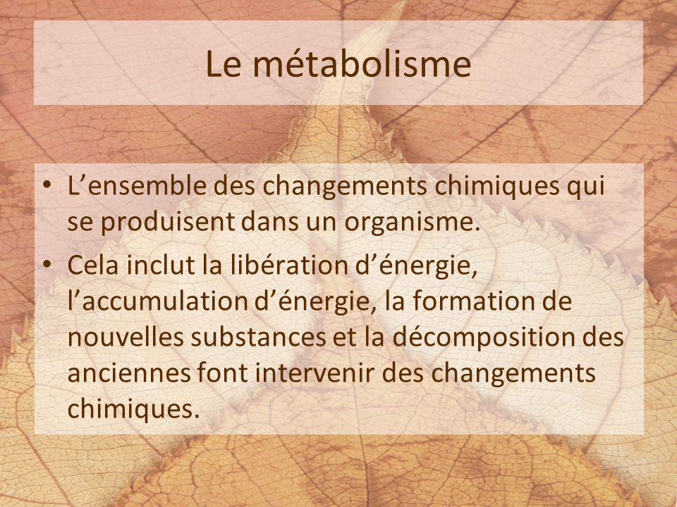 Le métabolisme L'ensemble des changements chimiques qui se produisent dans un organisme.