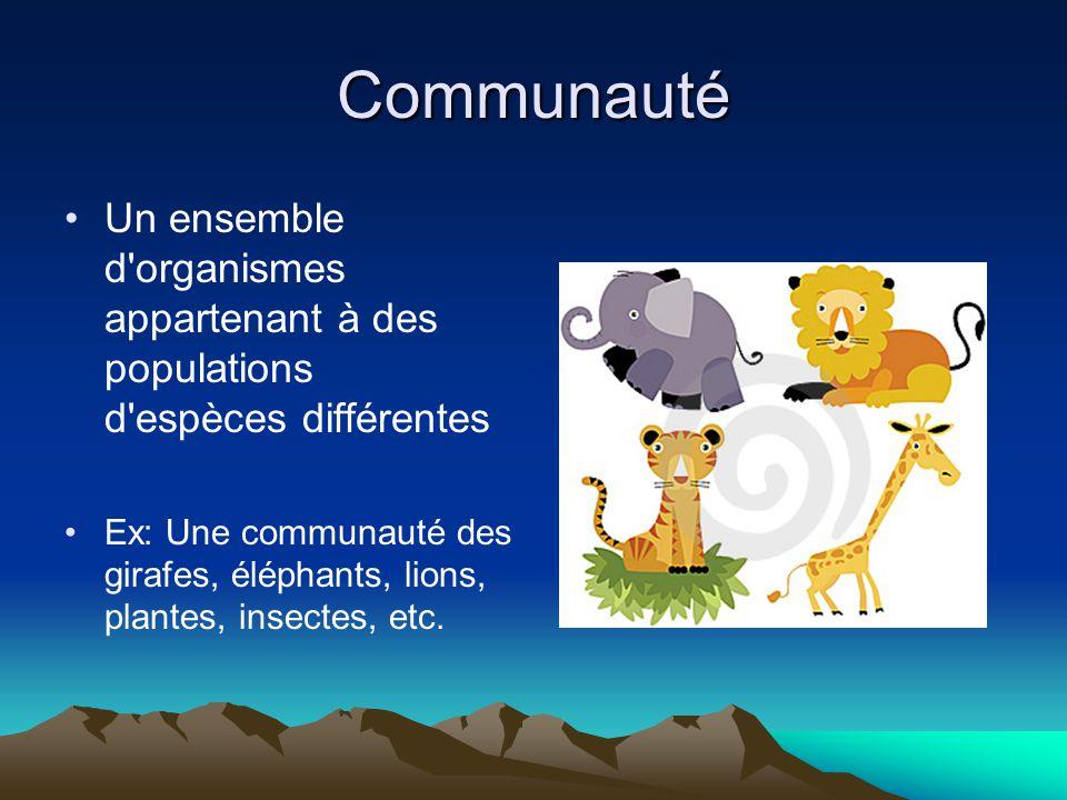 Communauté Un ensemble d organismes appartenant à des populations d espèces différentes.