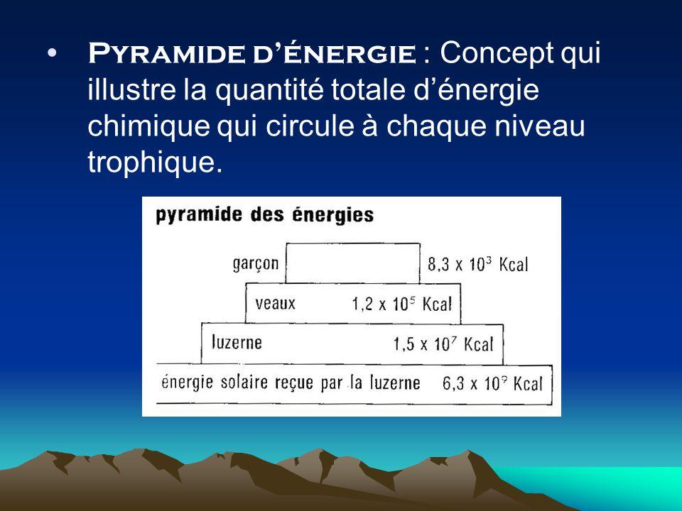 Pyramide d'énergie : Concept qui illustre la quantité totale d'énergie chimique qui circule à chaque niveau trophique.