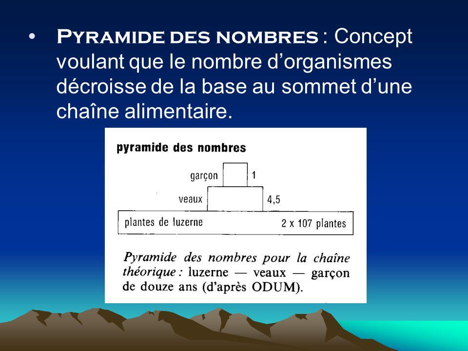 Pyramide des nombres : Concept voulant que le nombre d'organismes décroisse de la base au sommet d'une chaîne alimentaire.