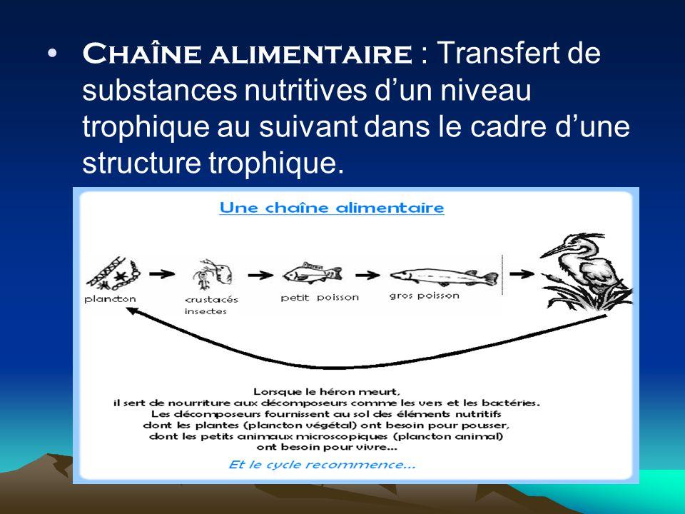 Chaîne alimentaire : Transfert de substances nutritives d'un niveau trophique au suivant dans le cadre d'une structure trophique.