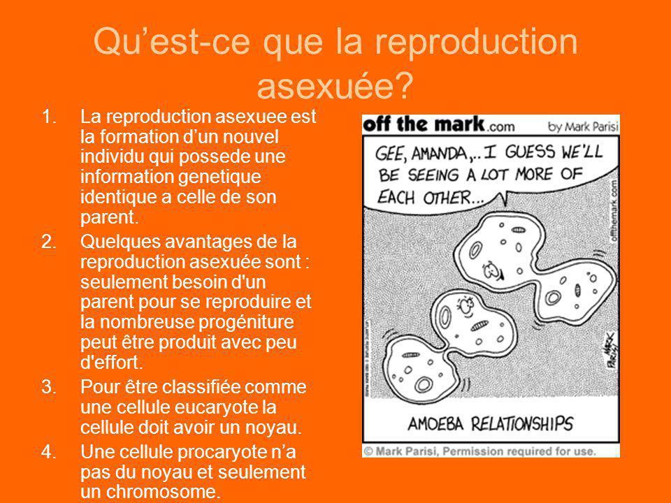 Qu'est-ce que la reproduction asexuée