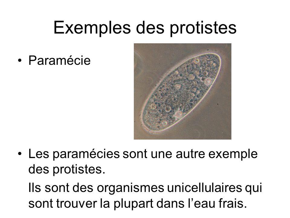 Exemples des protistes
