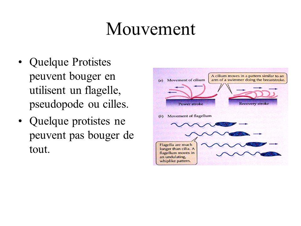 Mouvement Quelque Protistes peuvent bouger en utilisent un flagelle, pseudopode ou cilles.