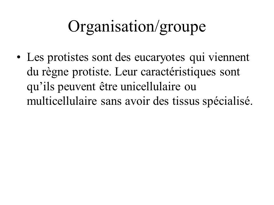 Organisation/groupe