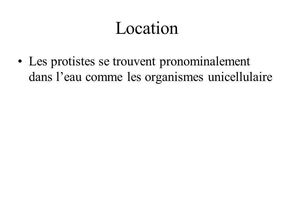 Location Les protistes se trouvent pronominalement dans l'eau comme les organismes unicellulaire