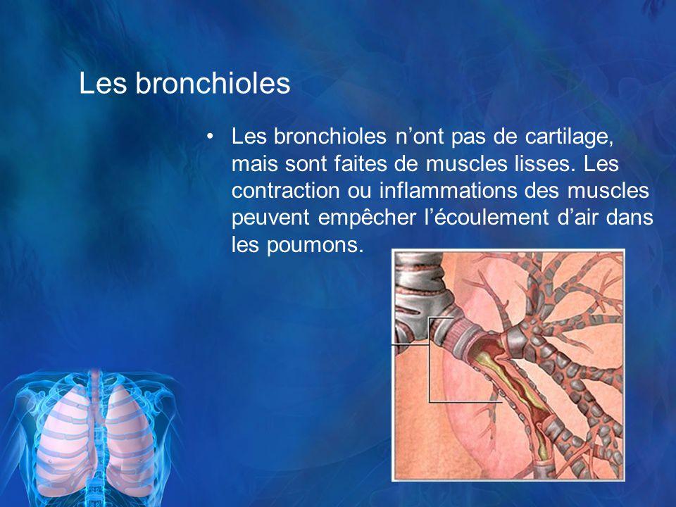 Les bronchioles