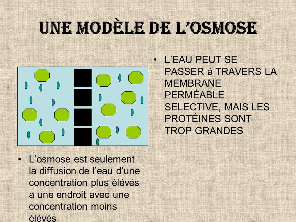 UNE MODèLE DE L'OSMOSE L'osmose est seulement la diffusion de l'eau d'une concentration plus élévés a une endroit avec une concentration moins élévés.
