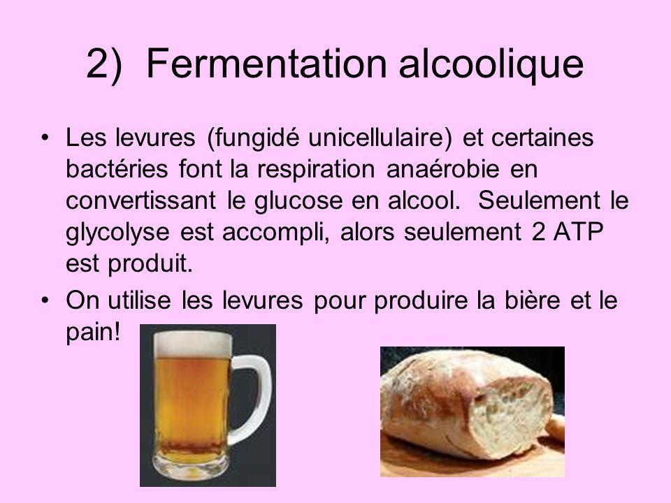 2) Fermentation alcoolique
