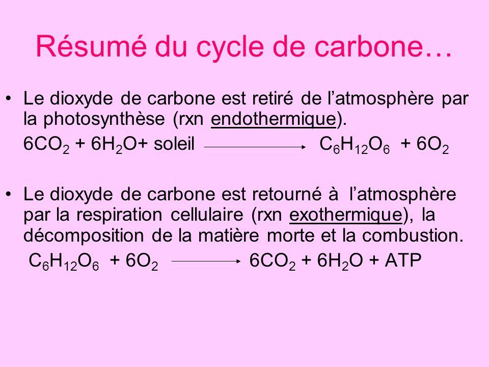 Résumé du cycle de carbone…