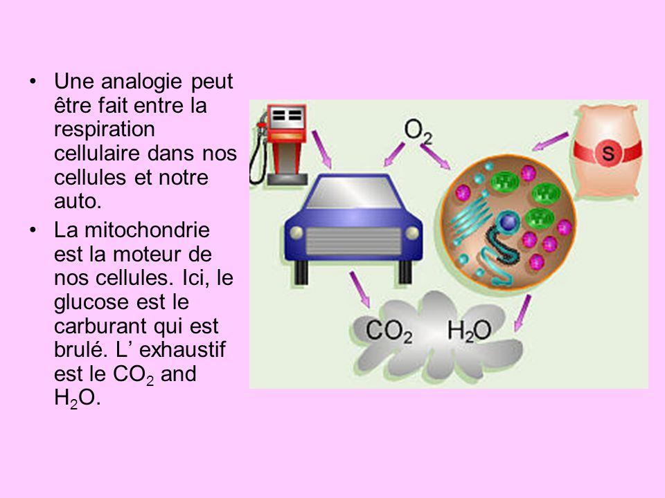Une analogie peut être fait entre la respiration cellulaire dans nos cellules et notre auto.