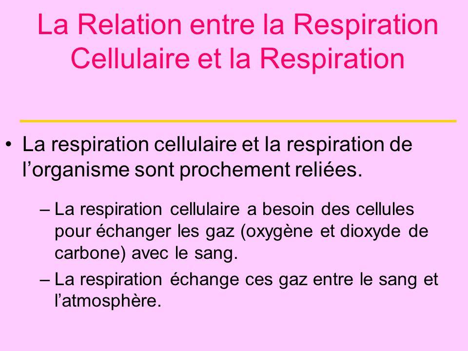La Relation entre la Respiration Cellulaire et la Respiration