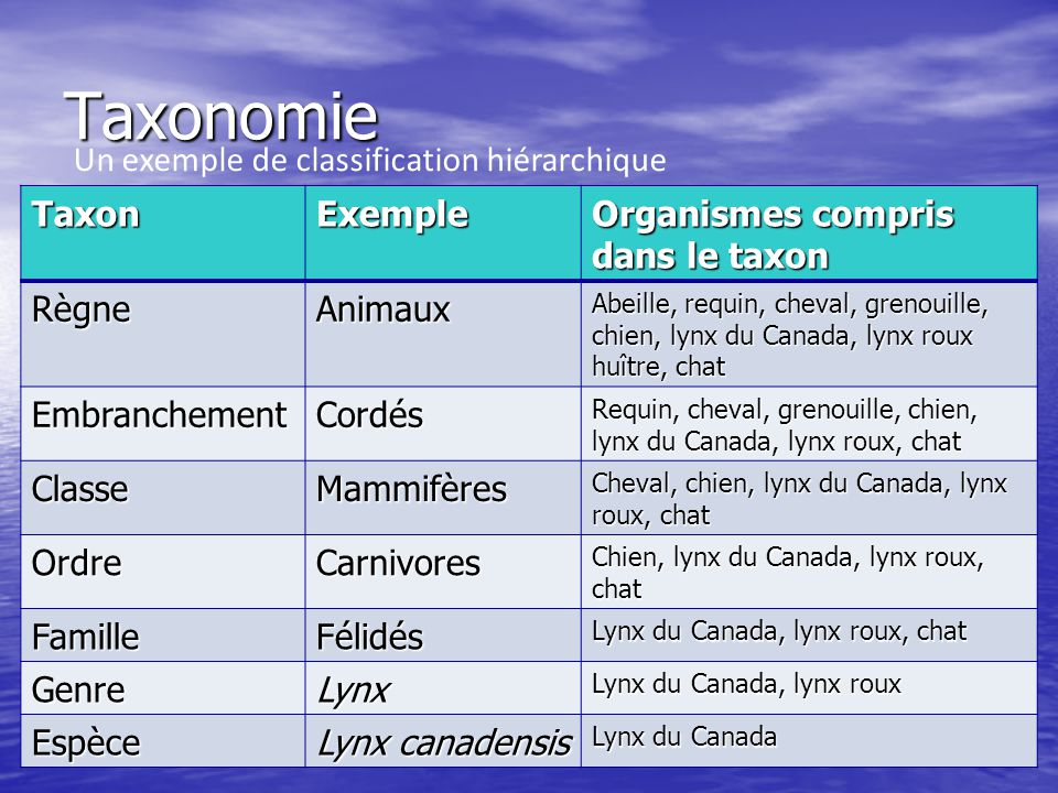 Taxonomie Un exemple de classification hiérarchique Taxon Exemple