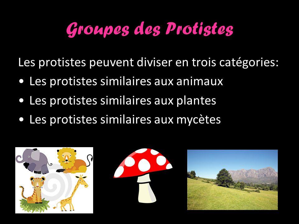 Groupes des Protistes Les protistes peuvent diviser en trois catégories: Les protistes similaires aux animaux.
