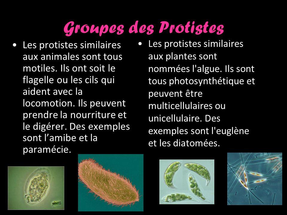 Groupes des Protistes