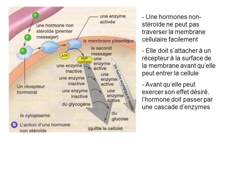 - Une hormones non-stéroïde ne peut pas traverser la membrane cellulaire facilement