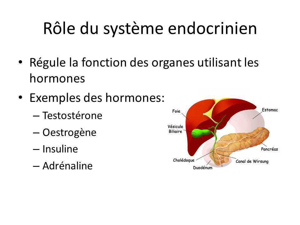 Rôle du système endocrinien