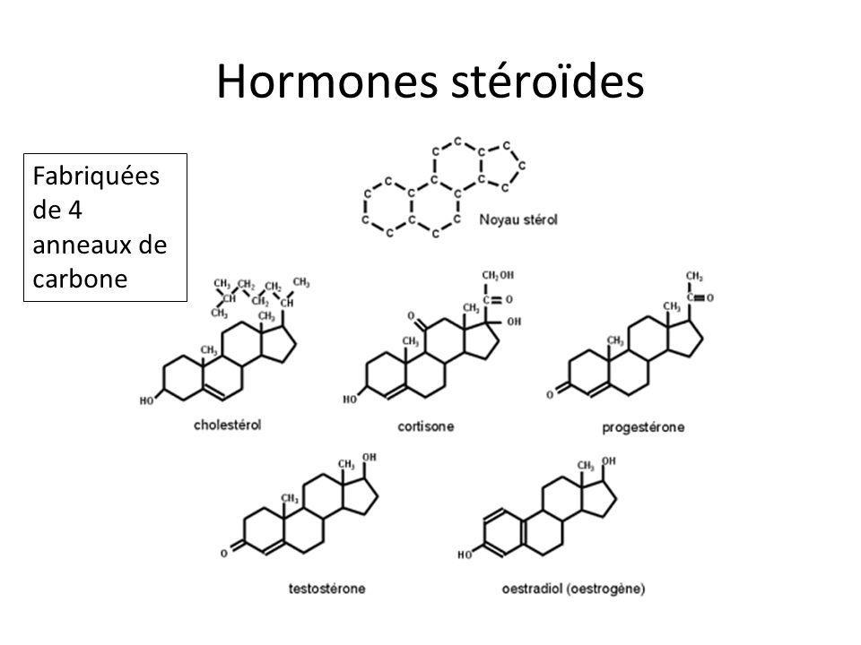 Hormones stéroïdes Fabriquées de 4 anneaux de carbone