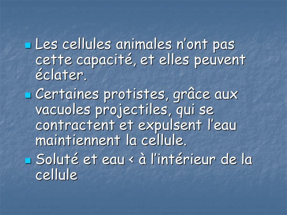 Les cellules animales n'ont pas cette capacité, et elles peuvent éclater.