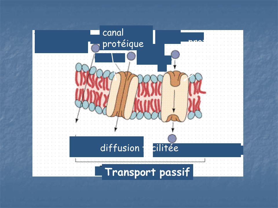 Transport passif canal protéique protéine porteuse diffusion
