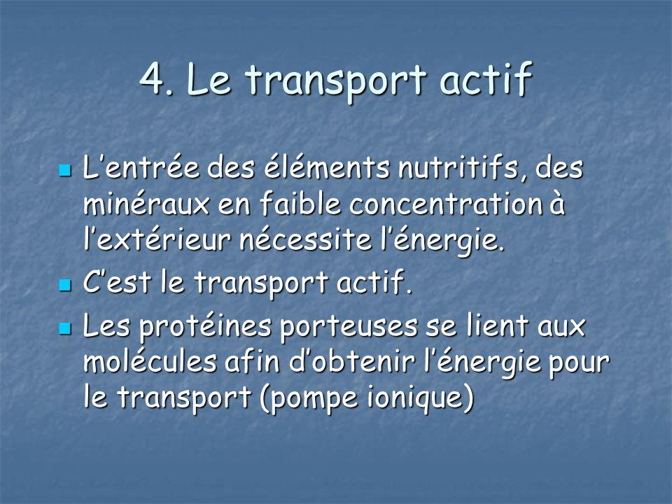 4. Le transport actif L'entrée des éléments nutritifs, des minéraux en faible concentration à l'extérieur nécessite l'énergie.