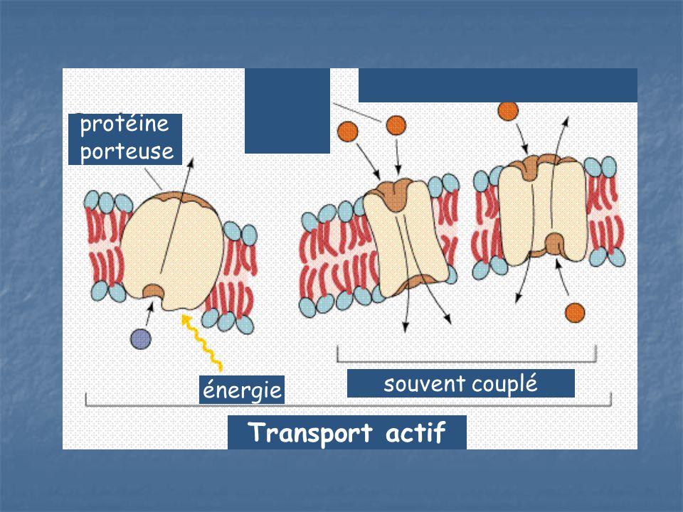 protéine porteuse souvent couplé énergie Transport actif