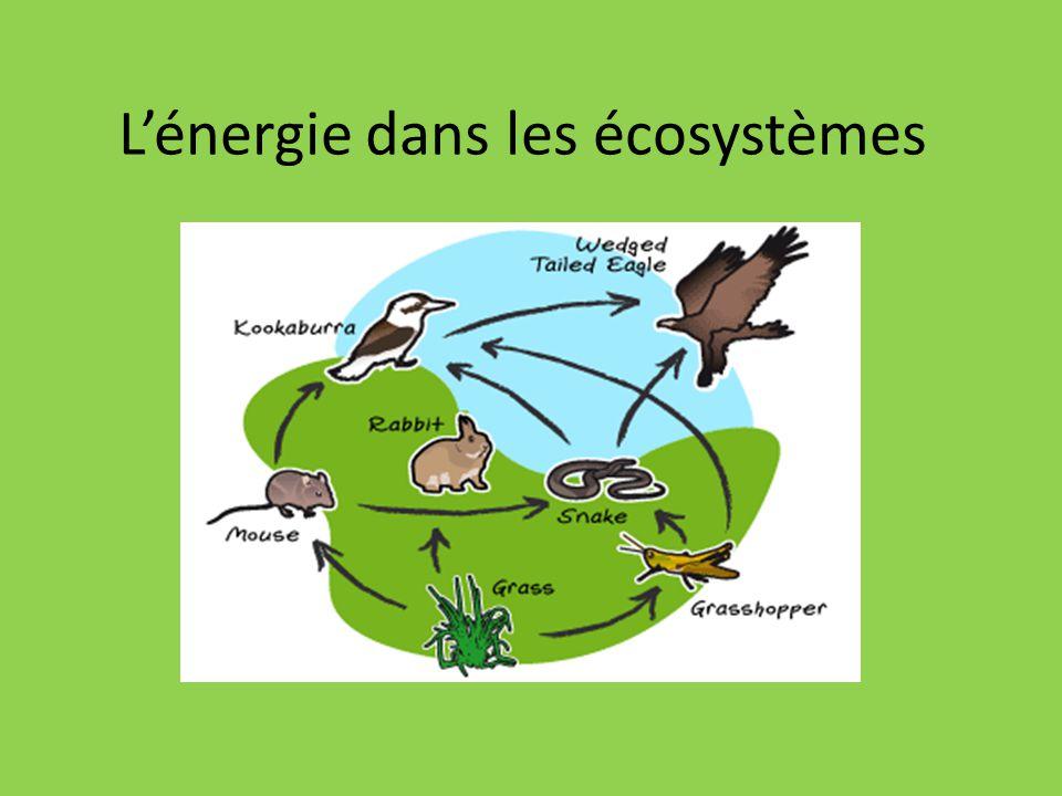 L'énergie dans les écosystèmes