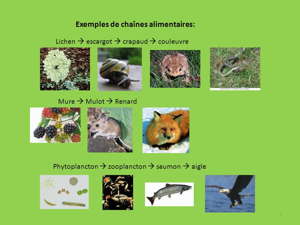 Exemples De Cha C Aenes Alimentaires A