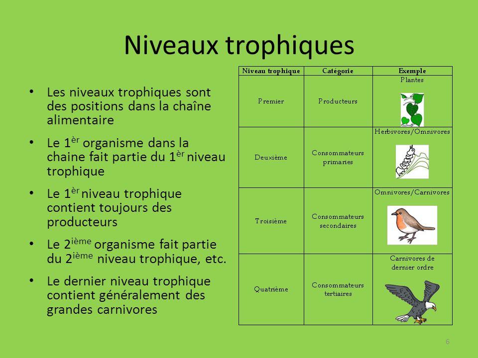 Niveaux trophiques Les niveaux trophiques sont des positions dans la chaîne alimentaire.