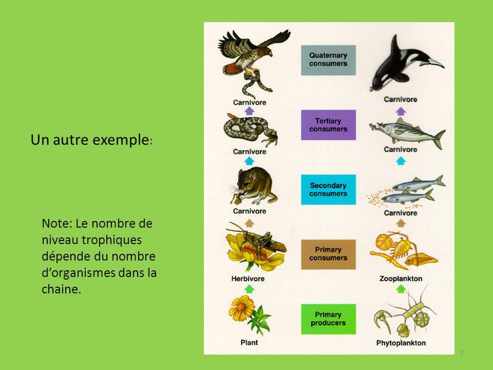 Un autre exemple: Note: Le nombre de niveau trophiques dépende du nombre d'organismes dans la chaine.