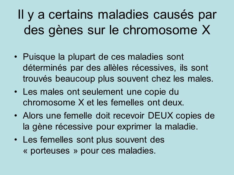 Il y a certains maladies causés par des gènes sur le chromosome X