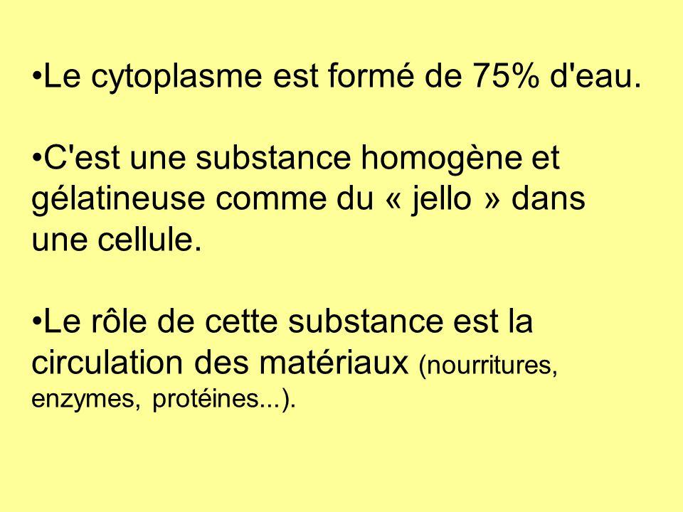 Le cytoplasme est formé de 75% d eau.