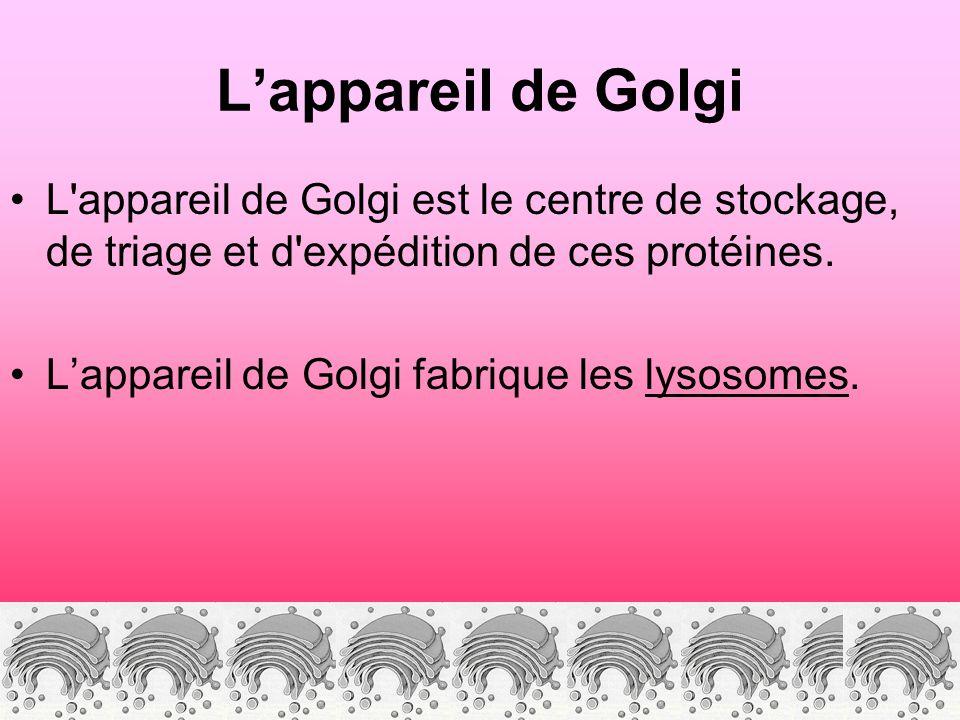 L'appareil de Golgi L appareil de Golgi est le centre de stockage, de triage et d expédition de ces protéines.